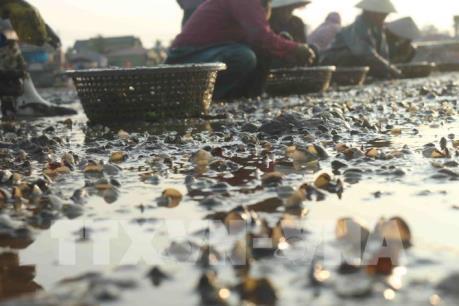 Nghệ An: Thủy sản chết trên diện rộng chưa rõ nguyên nhân