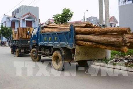 Phát hiện hơn 80m3 gỗ không rõ nguồn gốc lưu thông trên Quốc lộ 1A