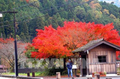 """Nhật Bản đẹp """"hút hồn"""" trong sắc thu"""