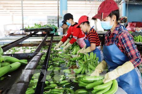 Xuất khẩu rau quả dự kiến tăng khoảng 10%