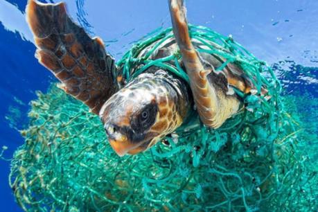 Rác thải nhựa gây thiệt hại khoảng 8 tỷ USD cho hệ sinh thái biển