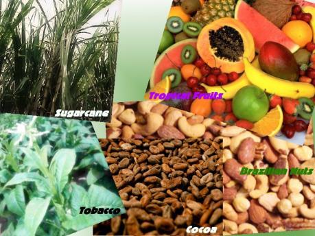 Xuất khẩu nông sản thô của Brazil sẽ vượt ngưỡng 100 tỷ USD