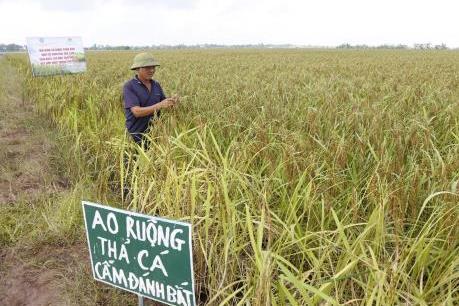 Trồng lúa đặc sản kết hợp thủy sản cho thu nhập cao