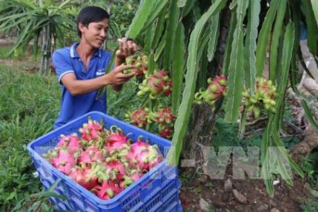 Giải pháp mới giúp trồng thanh long trái vụ tiết kiệm điện