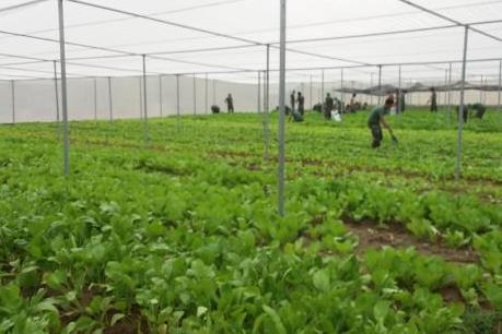 Xu hướng đầu tư nông nghiệp công nghệ cao