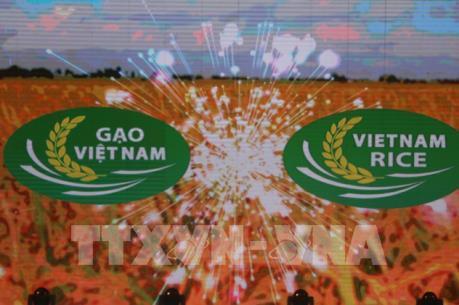 Nhận diện logo thương hiệu gạo Việt Nam