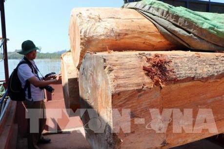 Kon Tum xử lý gần 500 vụ vi phạm Luật Bảo vệ và Phát triển rừng