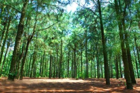 Thu hồi dự án vì quản lý kém, để mất rừng