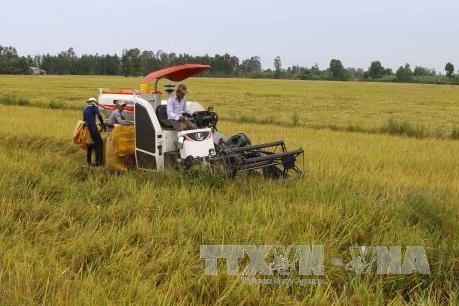 Hậu Giang hỗ trợ doanh nghiệp xây dựng nhà máy chế biến gạo xuất khẩu