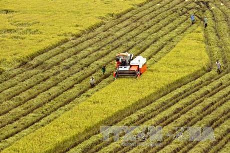 Tổ chức Hội nghị trực tuyến tổng kết ngành nông nghiệp