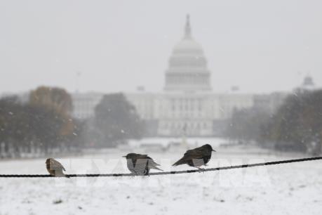 Gần 600 chuyến bay bị hủy vì bão tuyết bất thường ở miền Bắc nước Mỹ
