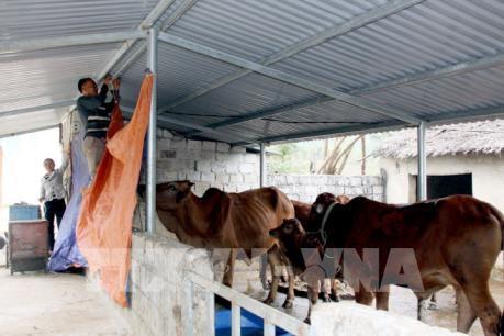 Chống đói, rét cho vật nuôi khi nhiệt độ xuống thấp