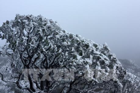 Chiều tối và đêm nay, Sa Pa khả năng xuất hiện mưa tuyết hoặc băng giá