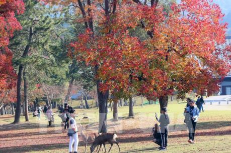 Độc đáo công viên Nara (Nhật Bản)