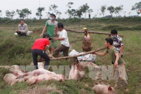 Kiến nghị xử lý việc đăng thông tin không chính xác về bệnh dịch tả lợn