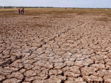 Nông nghiệp Italy thiệt hại 1,5 tỷ euro do nắng nóng