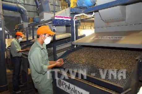 Cà phê Việt Nam tiếp tục là mặt hàng xuất khẩu số một sang Algeria