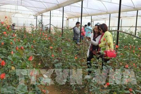 Lâm Đồng thêm Làng hoa Vùng nông nghiệp ứng dụng công nghệ cao