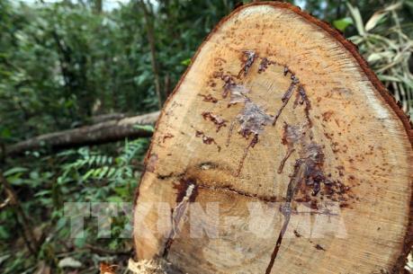 Thêm 6 đối tượng bị khởi tố trong vụ phá rừng tại Vườn Quốc gia Phong Nha - Kẻ Bàng