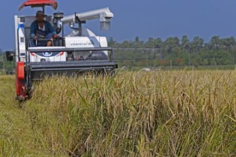 EC chính thức áp thuế với gạo từ Campuchia và Myanmar