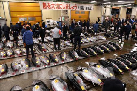 Chợ cá nổi tiếng Tsukiji sẽ thành bãi đỗ xe cho Thế vận hội Tokyo 2020