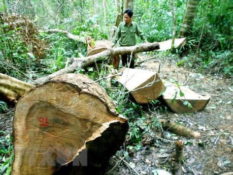 Xử lý nghiêm hành vi phá rừng phòng hộ ở huyện Đại Từ, Thái Nguyên