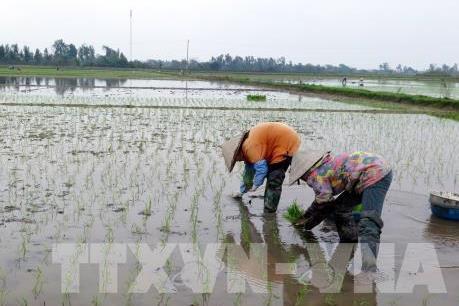 Bắc Ninh chủ động cung cấp nước phục vụ sản xuất vụ Xuân