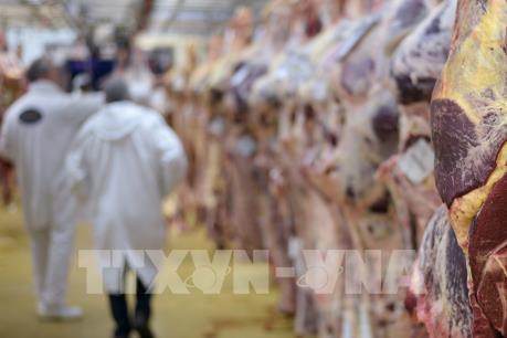 Bê bối thịt bò bẩn đe dọa ngành chế biến thịt Ba Lan