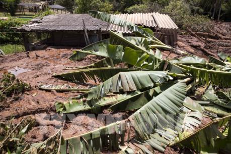 Tập đoàn Vale bị tước giấy phép sau vụ vỡ đập tại Brazil