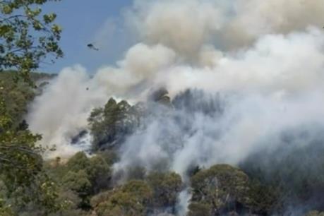 Cháy rừng tại New Zealand