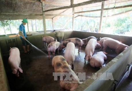 Hà Tĩnh: Vào cuộc giải quyết  lương và thưởng Tết cho Công nhân Công ty chăn nuôi Bình Hà