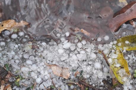 Điện Biên: Xuất hiện mưa đá bằng đầu ngón tay