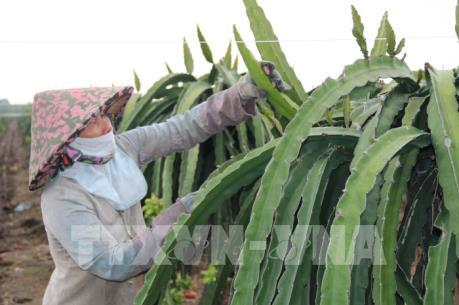 Cục Bảo vệ thực vật thông tin về việc Nhật Bản tăng tần suất kiểm tra nông sản Việt