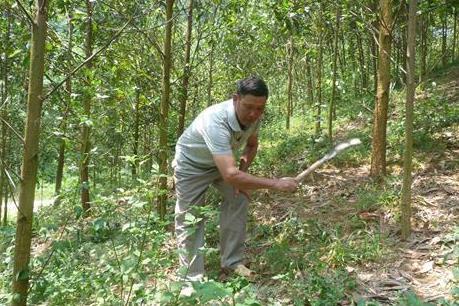 Phát triển rừng trồng theo tiêu chuẩn quốc tế