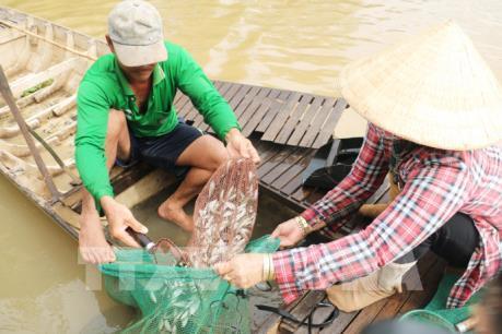 Đồng bằng sông Cửu Long đối mặt với nguy cơ chìm hoàn toàn