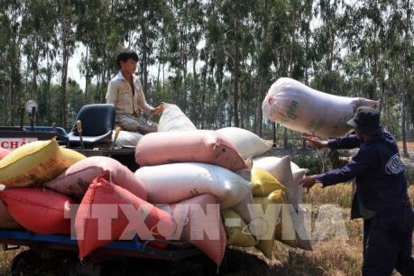 Hỗ trợ doanh nghiệp tìm kiếm thị trường xuất khẩu gạo