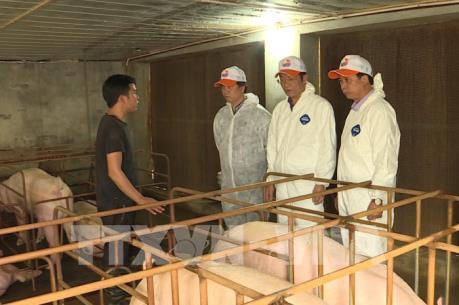 FAO khuyến cáo cảnh giác cao độ với dịch tả lợn châu Phi tại Việt Nam