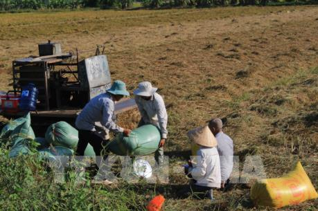 Dự kiến tháng 3 sẽ tổ chức đấu thầu thu mua lúa gạo