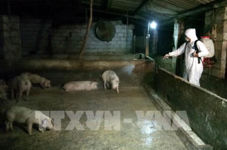 Bộ NN và PTNT kiểm tra công tác phòng, chống dịch tả lợn châu Phi