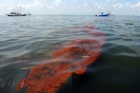 Australia mở chiến dịch kiểm soát thảm họa dầu tràn