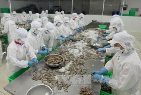 Tìm giải pháp thúc đẩy xuất khẩu tôm vào thị trường Hoa Kỳ