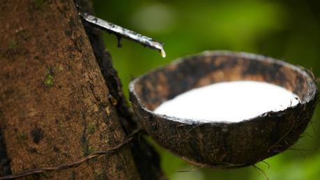 Ba nước ASEAN đồng thuận giảm xuất khẩu cao su