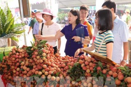 Điều kiện để vải thiều Lục Ngạn vào thị trường Nhật Bản