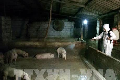 Các tỉnh, thành cấp bách ngăn chặn dịch tả lợn châu Phi