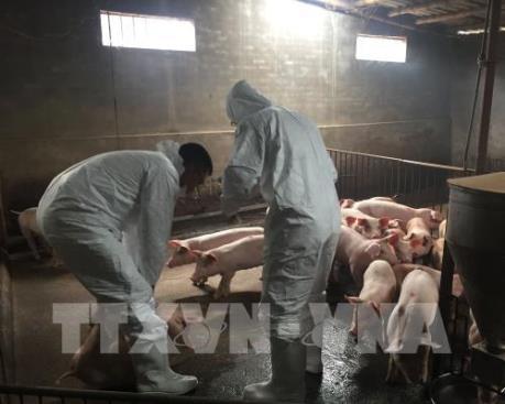 Thừa Thiên - Huế kiểm tra việc phòng chống dịch tả lợn châu Phi
