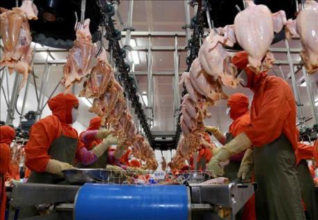 Mercosur muốn trở thành nhà cung cấp lương thực chính cho ASEAN