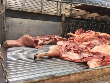 Bắt giữ hơn một tấn thịt lợn lở mồm long móng chuẩn bị đi tiêu thụ
