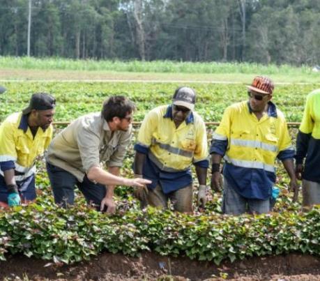 Australia nới lỏng quy định cấp thị thực với một số nghề