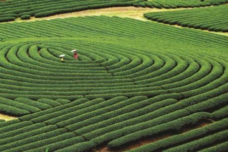 Công bố quy hoạch chung Khu du lịch quốc gia Mộc Châu đến năm 2030
