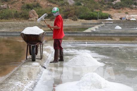 Thời tiết thuận lợi, muối được mùa được giá